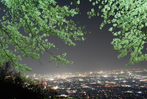 武田の杜見晴らし台の夜景の写真